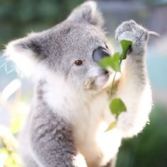 Sunday cuteness....are these the right leaves???