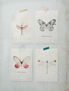Insect Study Postcard Set $6.00 I need these to send to my penpals!