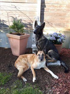 Hunde Foto: Tanja und Flash & Shakira - Schönen Sonntag- Abend.... Hier Dein Bild hochladen: http://ichliebehunde.com/hund-des-tages  #hund #hunde #hundebild #hundebilder #dog #dogs #dogfun  #dogpic #dogpictures