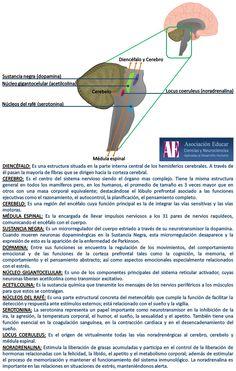 Sistema reticular - Asociación Educar - Ciencias y Neurociencias aplicadas al Desarrollo Humano - www.asociacioneducar.com