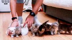 Prendete 10 gattini, piccoli, ma davvero piccoli e provate a metterli tutti in fila per fotografarli. ° twitter@fulviocerutti °