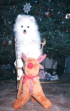 Kimba's First Christmas  *dansuehath