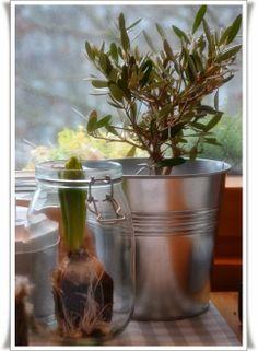 Küche Glass Vase, Plants, Home Decor, Homes, Decoration Home, Room Decor, Plant, Home Interior Design, Planets