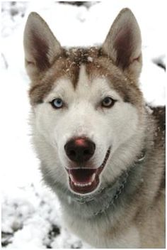 Cody on Snow Day 2010