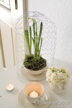 Make a chicken wire cloche and give any vignette a little extra pezzaz. http://www.songbirdblog.com