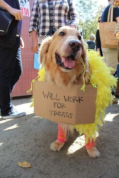 Big Bird is still a working dog.
