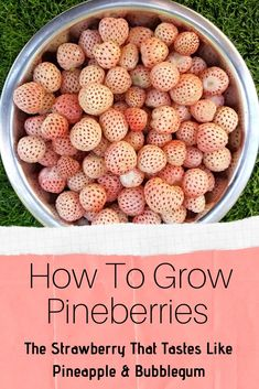 gardens How To Grow Pineberries - The Strawberry That Tastes Like Pineapple & Bubblegum Ready to try a strawberry that tastes like pineapple and bubblegum? Then you should consider growing pineberries this year! Growing Veggies, Growing Plants, Fruit Garden, Edible Garden, Veggie Gardens, Permaculture, Irrigation, Alpine Strawberries, Growing Raspberries