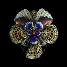 Insect Wings Made to Look Like Flowers by Seb Janiak | Faith is Torment | Art and Design Blog