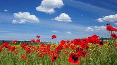 Flowers Spring Landscape Wallpapers