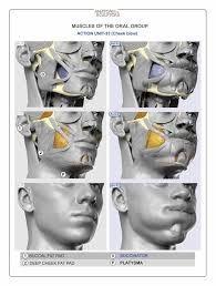 Resultado de imagen para anatomy 4 sculptors pdf