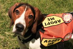24 Best Coonhounds Us Lost Dog Registry Images Losing A Dog Find Pets Dogs