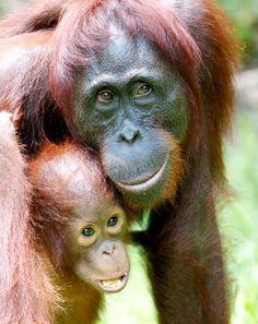 Hug an orangutan!