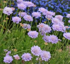Specializing in rare and unusual annual and perennial plants, including cottage garden heirlooms and hard to find California native wildflowers. Dutch Gardens, Back Gardens, Small Gardens, Drought Resistant Landscaping, Drought Tolerant, Water Wise, Garden Inspiration, Beautiful Gardens, Garden Plants