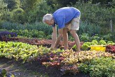 Tips for harvesting vegetables | www.charlesdowding.co.uk