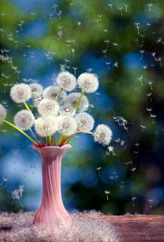 A Bouquet Of Wishes...