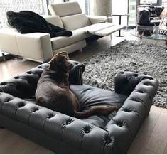 Dog Bed Frame, Custom Dog Beds, Dog Sofa Bed, Dog Hotel, Dog Salon, Pet Style, Cat Room, Pet Life, Exotic Birds