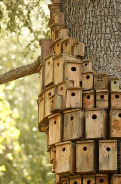 I really like these bird boxes that have been fitted to the trees. Not only do they allow the nesting birds to still be a part of their natural habitat, but they allow various species' and families of birds to nest here. Blue Tit's and many other bird families tend to group together after nesting/breeding season and this gives them the perfect opportunity to 'make friends'.