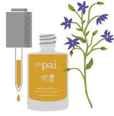 Pai Age Confidence Oil nydelig illustrert i britiske Stella tidligere i år.