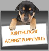 Please do not buy puppies from pet stores!  These are typically puppy mill pets.  Stop this horrific process!