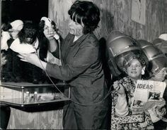 1969 Press Photo Joyce Green and her poodle get their hair done at salon