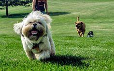 perrito en el parque