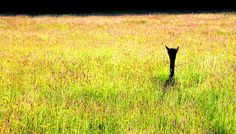 Baby Alpaca Bushey Mead Farm Peak District #dailyshoot