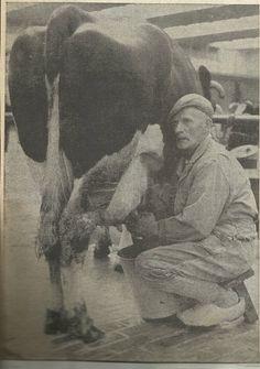 Harm Scholte. Vaste melker op veemarkt. Woonde achter Haijma Schoenen. Had daar zelf ook wat vee staan. Was ook de schilleboer van Stiens.