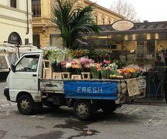 Il trippaio di San Frediano, Firenze