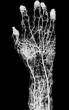 liberatingreality:  Anatomical <3