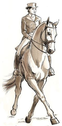 Half Pass at Collected Trot. Drawing by Sandy Rabinowitz. Courtesy Dressage Today