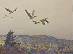 Robert Bateman Canada Geese Over The Escarpment