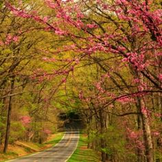 America's Best Spring Drives | Travel + Leisure