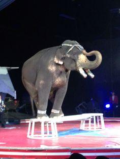 Circus 3-22-2014 front row seats. Seagate center