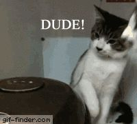 Curious cats | Gif Finder – Find and Share funny animated gifs