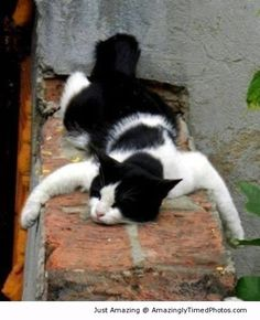 Time to relax – When the cat is just too exhausted to continue on, it just needs a place to stretch and lay down.