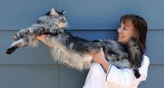 STEWIE  Longest Cat in the World l A 6-year-old fluffy feline from Reno, Nev., is the certified longest cat in the world. Stewie, a Maine Coon, measures 48.5 inches long from the tip of his nose to the end of his tail bone. (That's a little longer than 4 feet.)