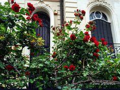 Roses - photo by Dana Stefanescu Bucharest Romania, Roses, Paris, Montmartre Paris, Pink, Rose, Paris France