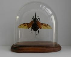 Collect insects and arachnoids in glass. I already have an Outback Scorpion and Outback Tarantula.