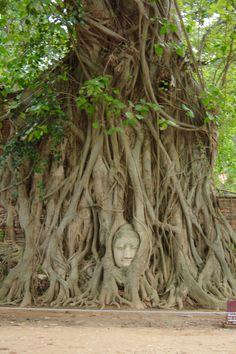 Ancient city of Ayutthaya, Thailand. #ayutthaya #thailand