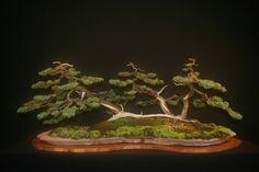 saikei bonsai landscape