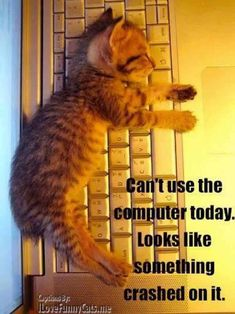 It's all too much for kitten! #cats #kittens #memes