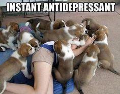El sueño ... #Puppies