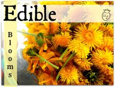 Forstythia Dandelion Jelly with Vanilla l Edible flowers are everywhere l Hometead Lady (.com)