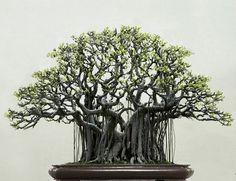 Black Bonsai | unknown
