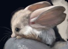 The Jerboa - Look at those over-sized ears! This little animal is a cross