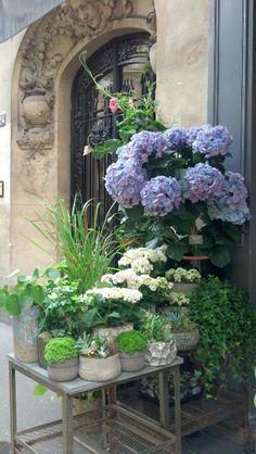 Boutique Shop Paris...pretty display of flowers