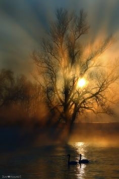 Korana by KAFOTKA Dinko Neskusil on 500px... #korana #rijeka #river #sun #sunce #sunset #swan #wood #mist