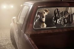 There's a striking cinematic quality to the haunting images in London-based photographer Martin Usborne's new series Mute: the silence of dogs in cars. Emotional Photos, Halloween Photography, Haunting Photos, Dog Poses, Dog Car, Photo Series, Book Photography, Stunning Photography, Rolodex