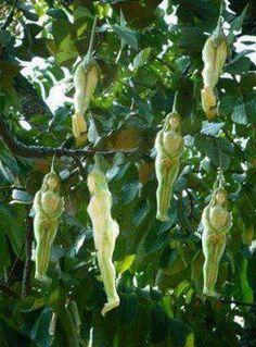 narilatha,növény,virág