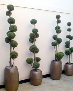 Don't panic it's ceramic: 10 reasons to choose natural stone planters - Urban Planters Topiary Plants, Topiary Garden, Topiary Trees, Indoor Garden, Garden Art, Indoor Plants, Outdoor Gardens, Stone Planters, Ceramic Planters